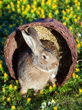 A Rabbit Sits in a Basket on a Blooming Meadow around Easter Time