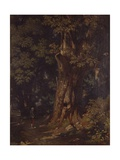 Chestnut Tree in Forest