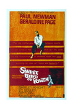 Sweet Bird of Youth  Paul Newman  1962