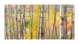 Autumn Woods  Acadia