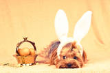 Cute Dog like Easter Bunny