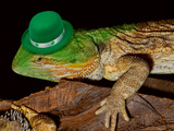 Green Hat Leprechaun Lizard