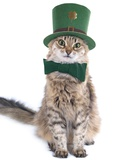 Cute St Patrick's Day Cat