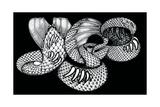 YES - Snakeskin Logo