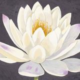 Moon Lily I