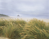 Sea Breeze Dunes