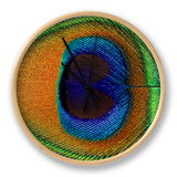 Close-Up of the Eye of a Peacock Feather  (Pavo Cristatus)