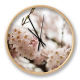Cherry Blossums (Sakura) on Mount Hakodate