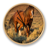 Mustang / Wild Horse  Chestnut Stallion Walking  Wyoming  USA Adobe Town Hma