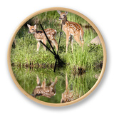 Two Whitetail Deer Fawns with Reflection  in Captivity  Sandstone  Minnesota  USA