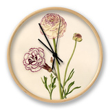 Dianthus plumarius: Ranunculus asiaticus