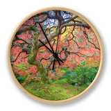 A Japanese Maple Turns Orange and Red at the Portland  Oregon Japanese Garden