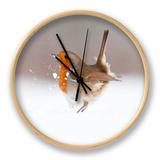 Robin (Erithacus Rubecula) Displaying in Snow  Nr Bradworthy  Devon  UK