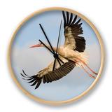 White Stork (Ciconia Ciconia) in Flight  Rusne  Nemunas Regional Park  Lithuania  June 2009