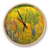Autumn Aspens in Kebler Pass  Colorado  USA