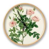 Rosier Pompon: Rosa Pomponia