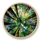 Redwood Grove