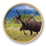 Bull Moose  Denali National Park  Alaska  USA