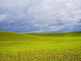 Spring Field of Peas with Storm Coming