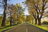 Oak Alley in Autumn Colors