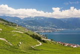 Lavaux Vineyards