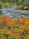 Autumn Color along Imnaha River