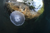 Jellyfish below the Surface