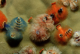 Color Variation in Christmas Tree Worms Growing on Coral (Spirobranchus Giganteus)