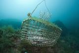 Fish Trap over a Coral Reef  Cap De Creus  Costa Brava  Spain