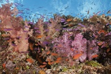 Colorful Fiji Coral Reef