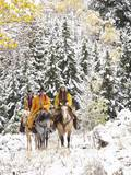 Cowgirls and Cowboy Riding in Autumn Aspens with a Fresh Snowfall