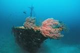 Halaveli Wreck and a Scuba Diver  Maldives