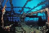 Scuba Diver Diving on Umbria Shipwreck  Sudan  Africa  Red Sea  Wingate Reef