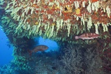 Soft Corals in Overhang  Maldives