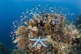 Colorful Coral Reef  Alam Batu  Bali  Indonesia