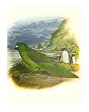 Antipodes Green Parakeet no 241