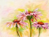 Echinacea  Oil Painting