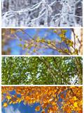 Collage Birch Tree Four Seasons alendar
