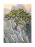 Watercolor Landscape Pine among Cliffs