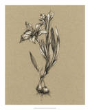 Botanical Sketch Black & White I