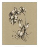 Botanical Sketch Black & White V