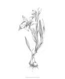 Botanical Sketch I