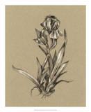 Botanical Sketch Black & White VI