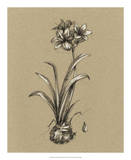 Botanical Sketch Black & White II