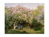 Lilac in the Sun  1872-1873