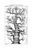 Haeckel's Scheme of Evolution Displayed in the Form of a Tree  1910