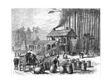 Turpentine Distillery  North Carolina  1870