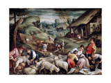 Summer Sheep Shearing  C1570-C1580