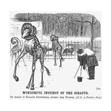 Wonderful Instinct of the Giraffe  1865