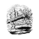 Man Carrying a Large Tree Trunk on His Shoulder  19th Century